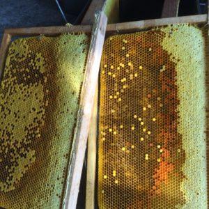 Mật ong dược liệu