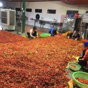 TƯƠNG ỚT MƯỜNG KHƯƠNG | 250ml - Hồn Việt Store