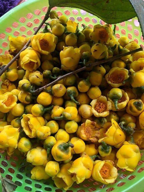 bông trà hoa vàng