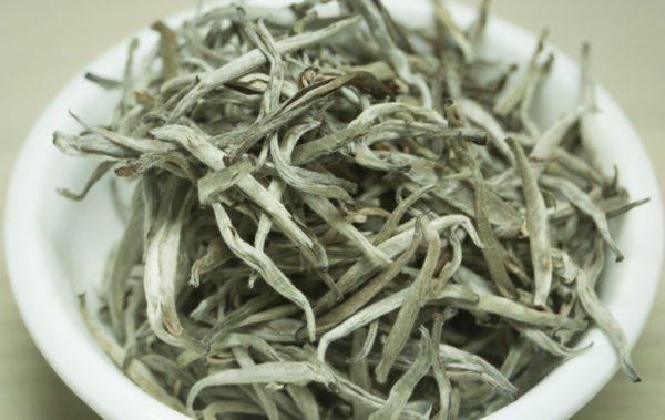 bạch trà trăm năm