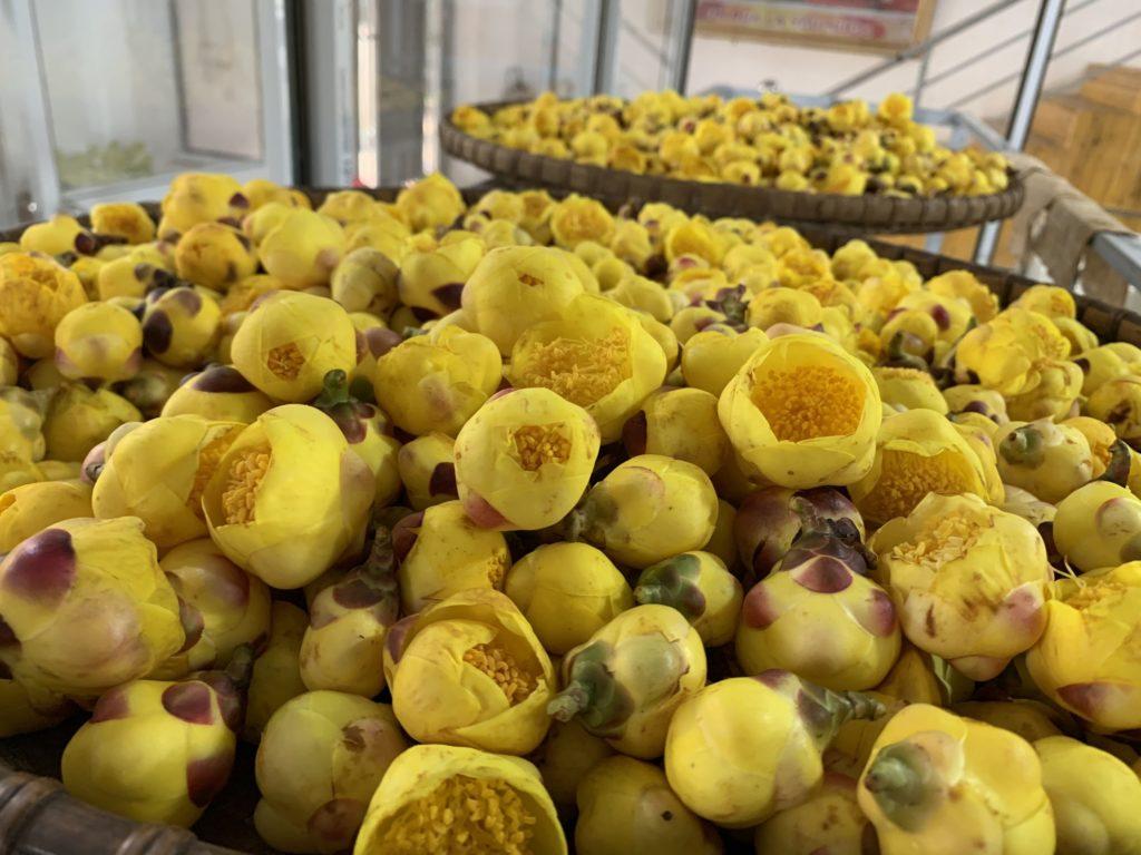 Ngắm vẻ đẹp đài các của trà hoa vàng - Hồn Việt Store